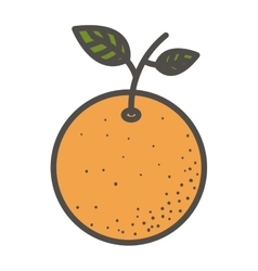 Isolated orange fruit design vector