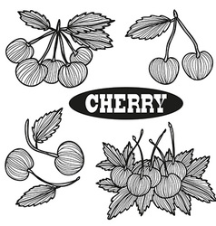 Hand drawn cherry fruits vector