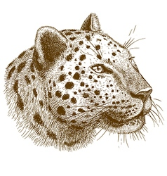 Engraving leopard head vector