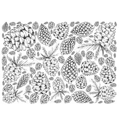 Hand drawn pine cones on white background vector