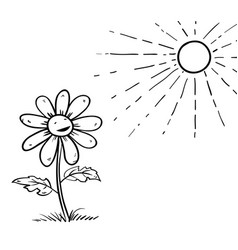 unflower look at sun vector image vector image