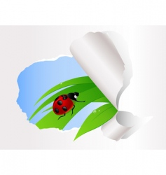 ladybird sitting on green grass vector image