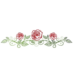Roses floral vector image