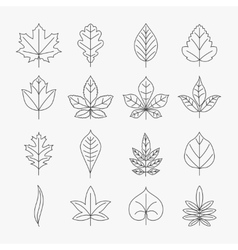 Leaf line icons set vector
