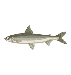 Coregonus albula vendance cisco fish vector image