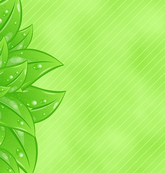 Ecology background with eco green leaves vector image vector image
