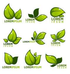 glossy leaves and plants empblems icons and vector image vector image