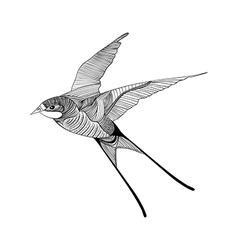 Zentangle stylized swallow hand drawn sketch for vector