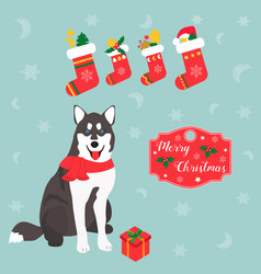 holiday husky christmas and new year background vector image