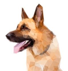 German shepard dog vector image
