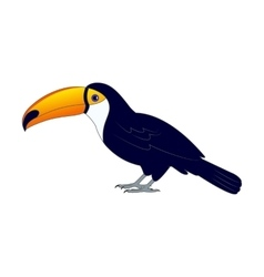 Colorful toucan bird on the ground vector image
