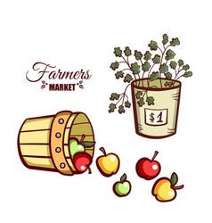 farmers market apples salad vector image