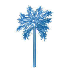 Palm tree trunk leaves botanical tropical isolated vector