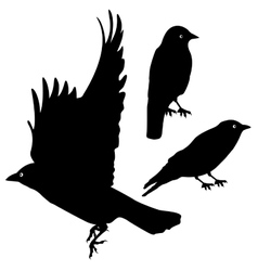 Birds Silhouette template set plus EPS10 vector image