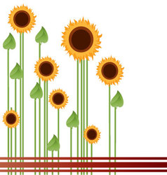 Sunflowers-in-a-field vector