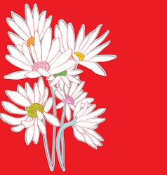 daisies red card vector image vector image