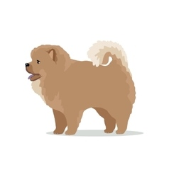Chow-chow dog breed flat design vector