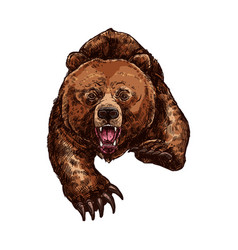 Grizzly bear roaring isolated sketch animal vector