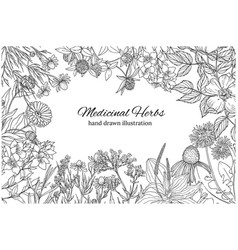 horizontal monochrome banner with medicinal vector image vector image