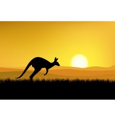 kangaroo with sunset background vector image vector image