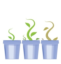 Set of flower pots shoots and death of plants vector