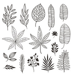 Set tropical leaves vector
