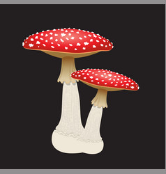two fly agaric mushrooms isolated on black vector image
