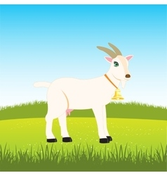 Nanny goat on field vector