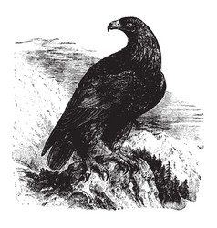 Royal eagle vintage vector
