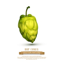 Hop cone isolated on white background vector