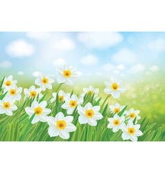 spring daffodils vector image vector image