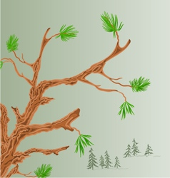 Pine tree old branch coniferous forest background vector