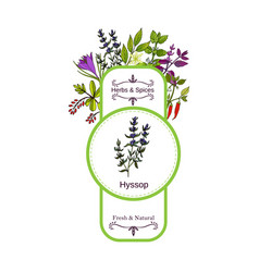 Vintage herbs and spices label collection hyssop vector