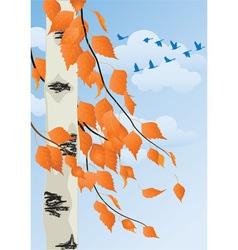 autumn birch vector image