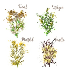 Cooking herbs and spices in watercolor style vector