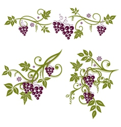 Vine grapes border vector