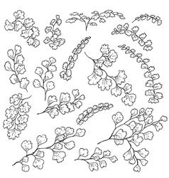 doodle fern vector image vector image