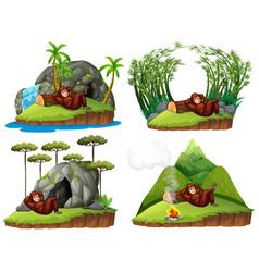 Orangutan in four different scene vector
