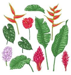 Tropic flowers sketch vector