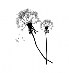 two black dandelions vector image