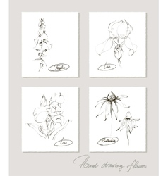 Flower collection of realistic sketches of flowers vector