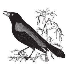 Rusty crow blackbird vintage vector