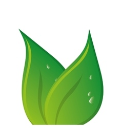 Green leaves leaf nature vector