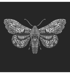 Amazing fly butterfly vector image