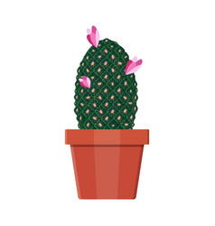 Cactus plant in flower pot decoration home plant vector
