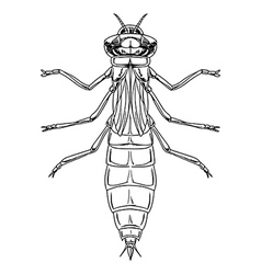 A dragonfly nymph vector