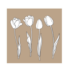 Hand drawn set of side view black and white tulip vector