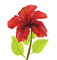 Red hibiscus vector