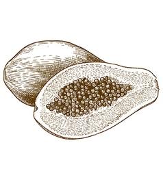 engraving papaya vector image vector image