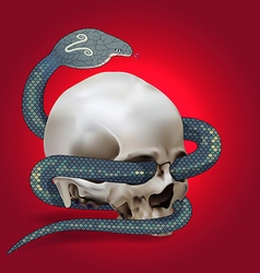 Human skull entwined by snake vector image vector image